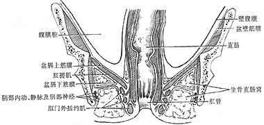 血管、淋巴管、淋巴结及神经外, 窝内脂肪的血供欠佳,又邻直肠和